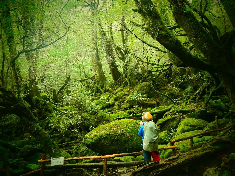 4.0            120                          屋久島ガイドクラブ            【屋久島・トレッキング】もののけの森を抜け太鼓岩へ!白谷雲水峡プラン★