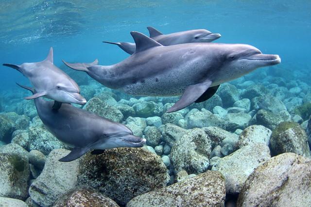 竹芝発御蔵島 ドルフィンスイム 2泊3日 野生のイルカと泳ぐ夢を叶え