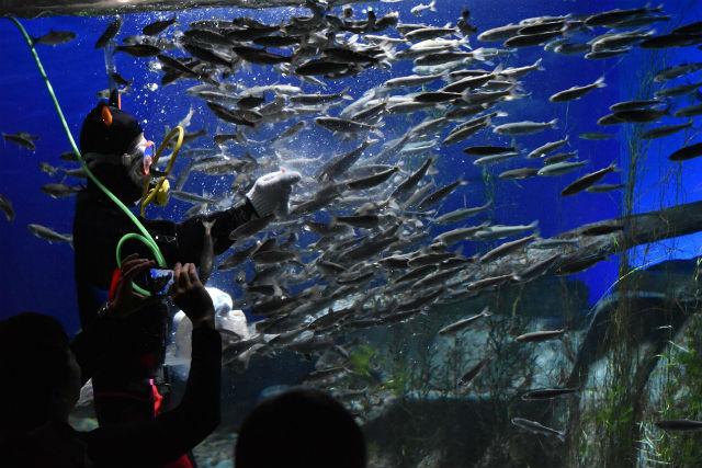 サケのふるさと 千歳水族館|割...