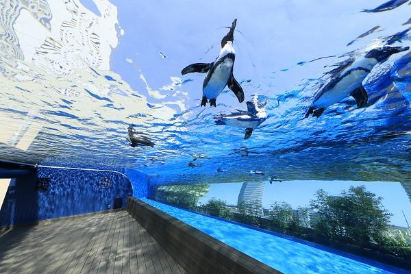 「サンシャイン水族館」の画像検索結果